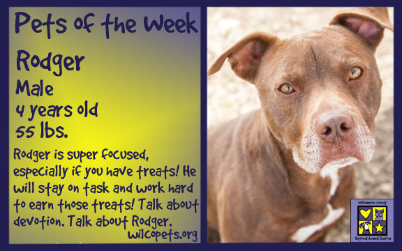 Dog of the week Rodger