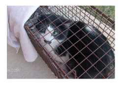 Image of a cat in a humane trap