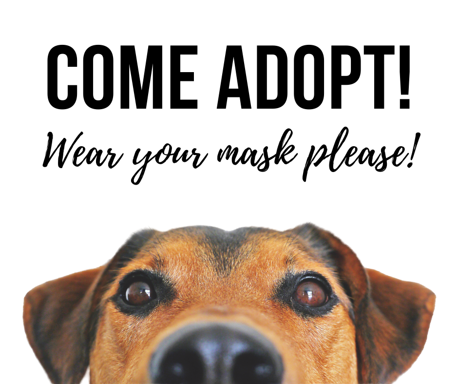 Adopt Please wear your mask!