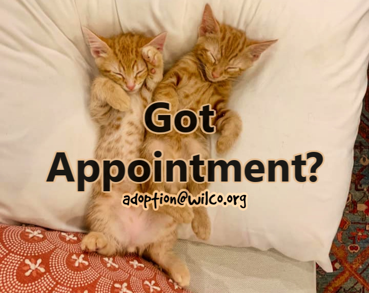 Got Appointment?